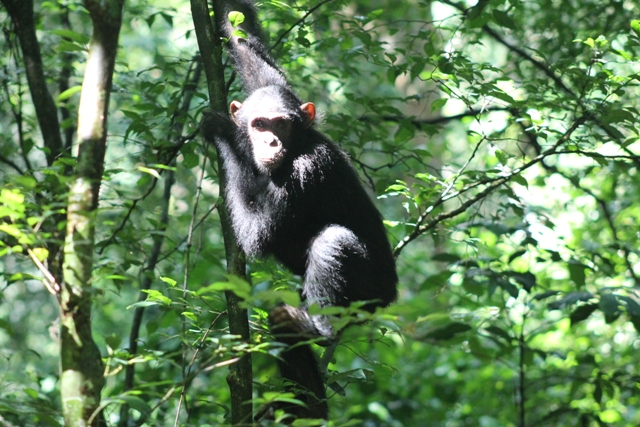 7 DAYS RWANDA SAFARI (ONE WEEK) - gorilla safari tours