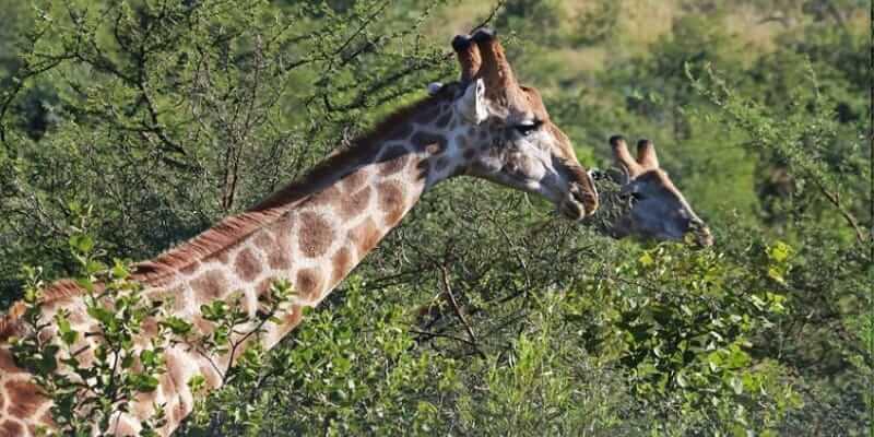 7 Days Rwanda Wildlife Safari Tour Akagera