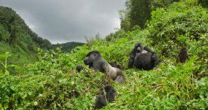 8 Days Rwanda Safari - Gorilla Trekking