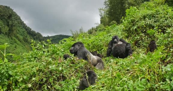 7 Days Rwanda Gorilla Trekking Safari and Wildlife Tour