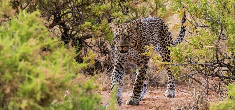 7 Days Rwanda Wildlife Safari: