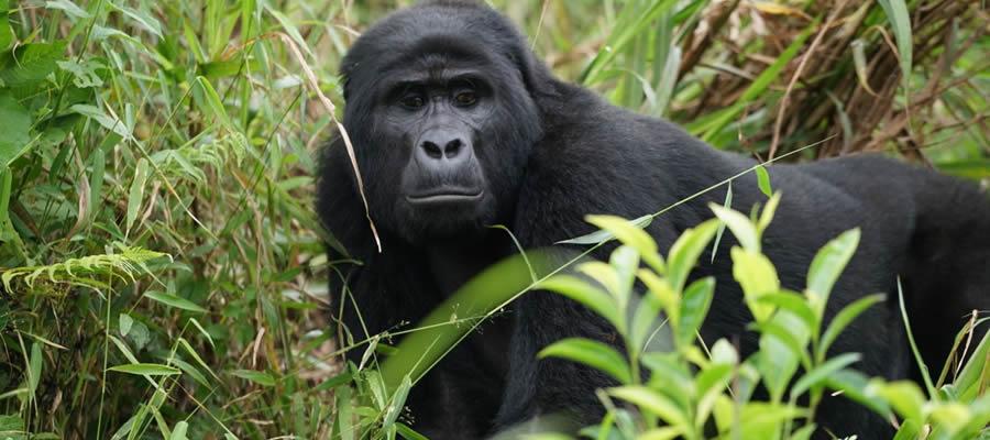 Rwanda Uganda Safari - mountain
