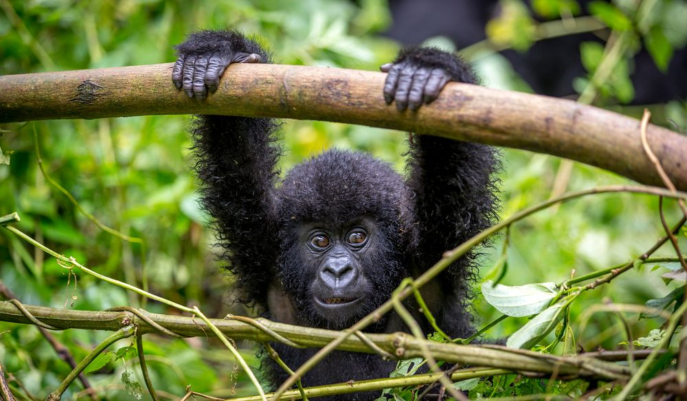 7 days Rwanda Wildlife safari