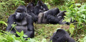 7 Days Rwanda Congo Gorilla Safari - Luxury meets Budget