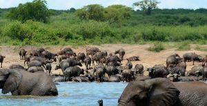 7 Days Uganda Safari - Best Long Uganda Wildlife