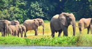 10 Days Uganda safari elephants in murchison falls