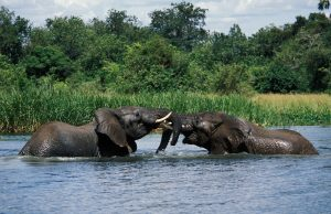 3 Days Murchison Falls Safari - Most Popular Short Uganda Wildlife Safari Tour