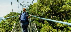 canopy walk in Nyungwe Forest National Park rwanda