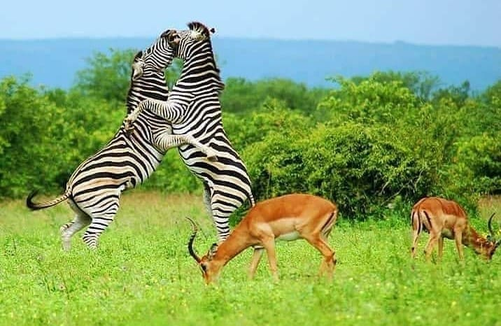 10 days Uganda safari