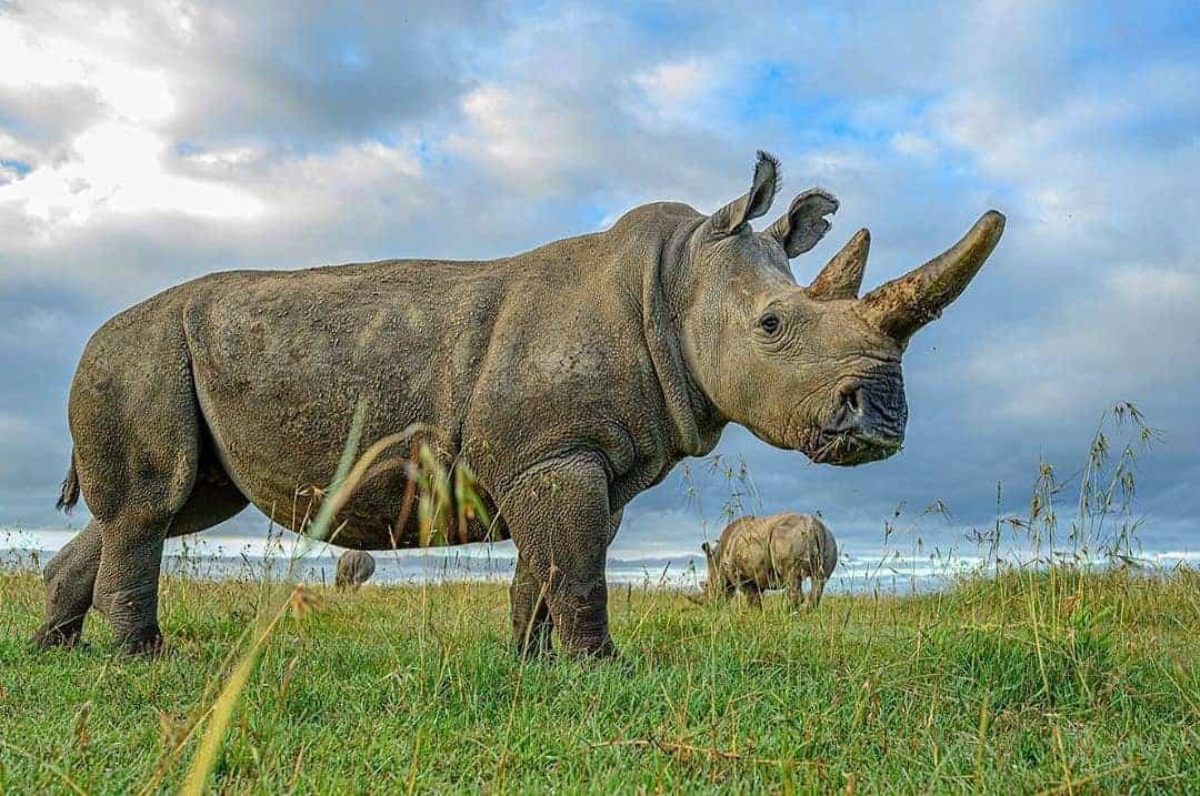 14 Days Primates & Big Five Safari
