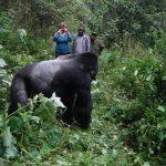 Is Gorilla Trekking Worth the Cost?