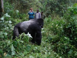 Is Gorilla Trekking Worth the Cost?