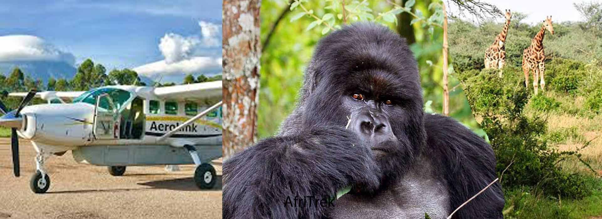 4 Days Flying Gorilla Trekking and Wildlife
