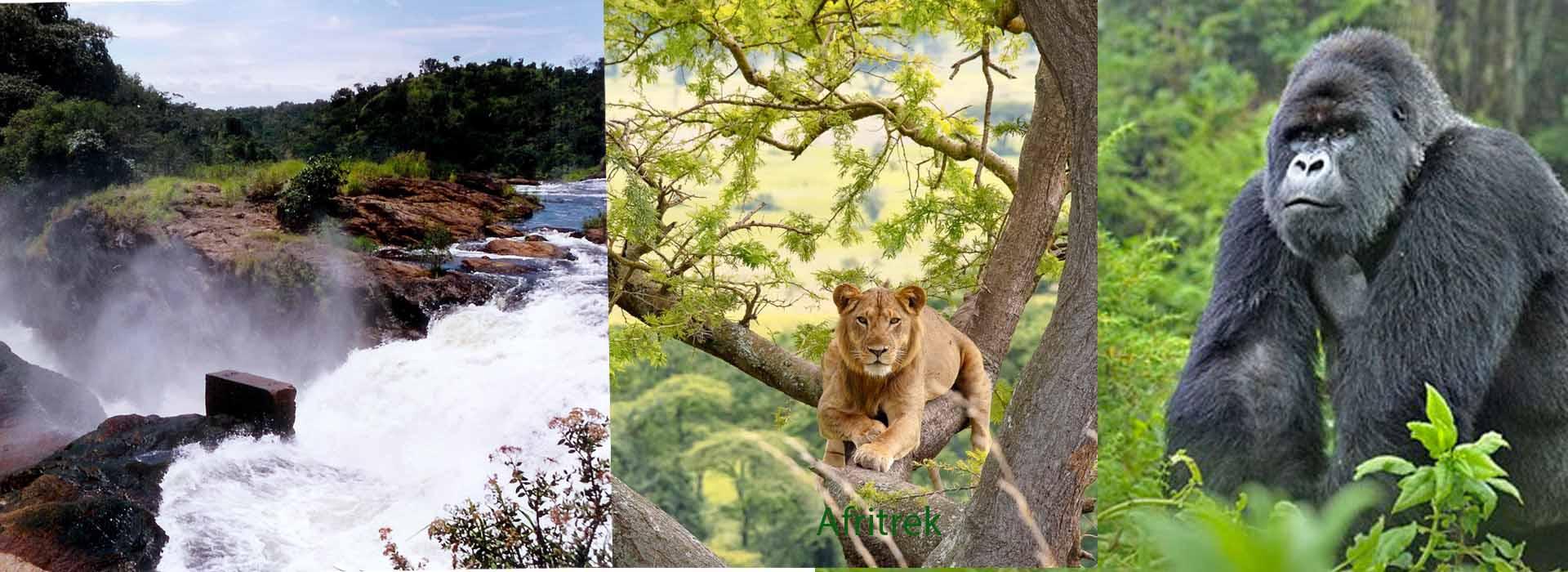 5 Best Places To Safari In Uganda
