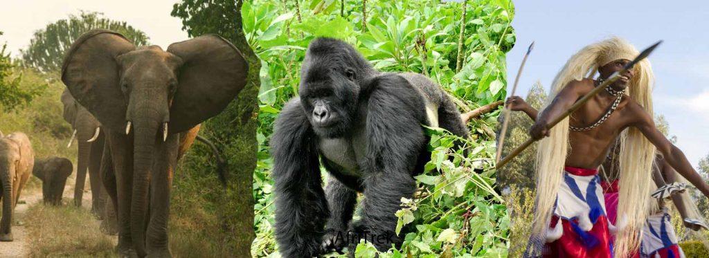 10 Days Gorilla Trekking Rwanda and wildlife safari
