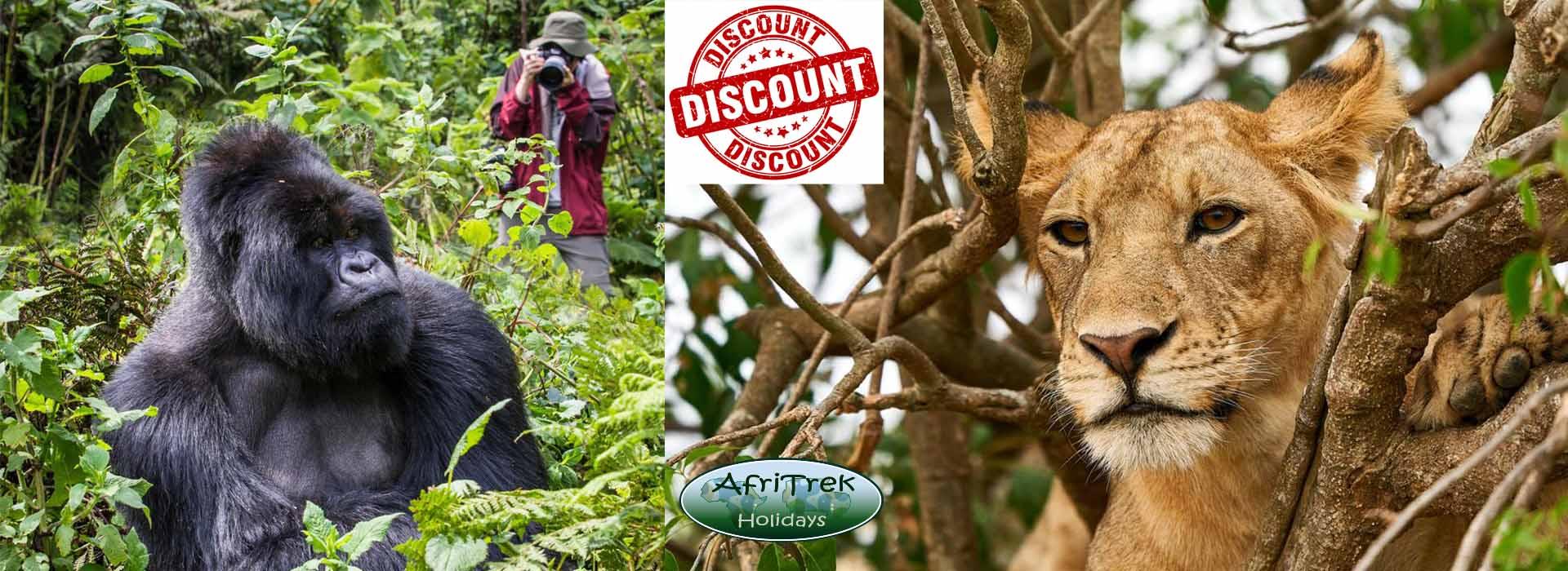 Uganda Announces 43% Discount on Gorilla Permits