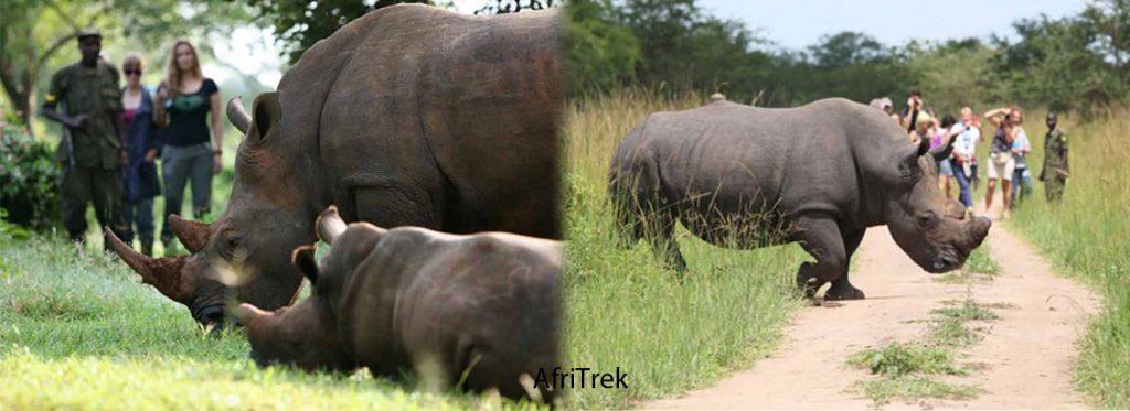 Rhino Trekking Uganda
