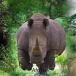 Rhino Trekking at Ziwa Rhino Sanctuary Uganda