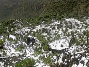 Rwenzori Mountains National Park snow