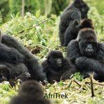 Things To Do in Rushaga Region after Gorilla Trekking