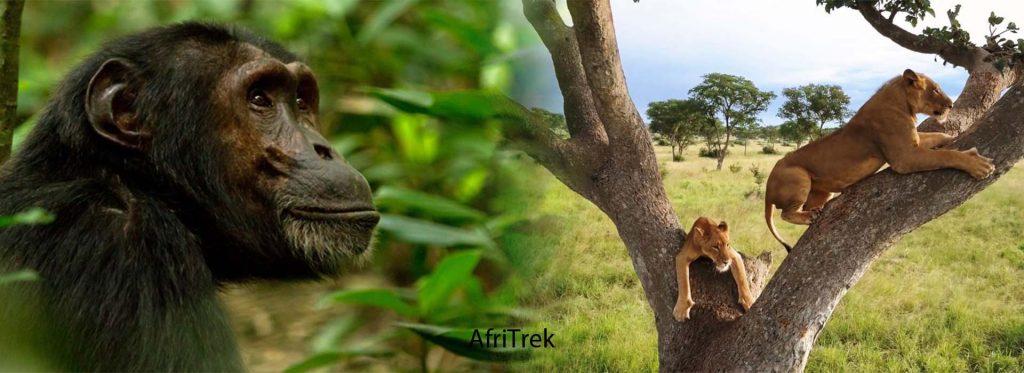 6 Days Uganda Safari