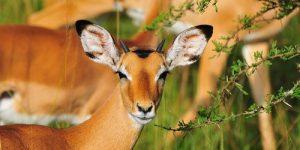 Lake Mburo national park wildlife
