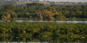 sightseeing in Murchison Falls National Park