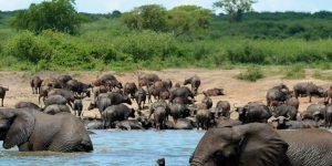 wildlife in queen elizabeth national park uganda